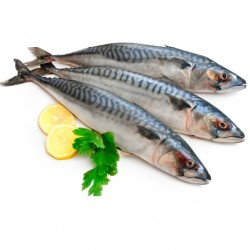 EL Menshawy Fishes  _   Fish  Fresh mullet  Uncooked